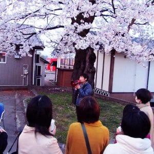副社長から奇跡の桜の逸話が語られます。
