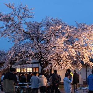 日が落ちると、日中とはまた違った雰囲気の桜が楽しめました